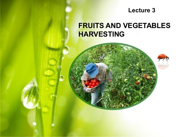 Lecture 3 FRUITS AND VEGETABLES HARVESTING