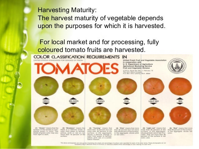 maturity of fruits and vegetables and Post harvest management of fruits and the maturity indices of fruits and vegetables are documents similar to post harvest management of fruits and vegetables.