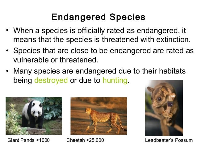 endangered species and how they impact When a species becomes endangered, however, there can be unanticipated consequences for humanity  a negative impact on human beings if osprey, for example, were to become endangered, population numbers of the fish they eat -- pike -- would increase that would endanger perch, which are eaten by pike  threatened and endangered species.