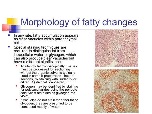 Modulation der intestinalen Mikrobiota durch Ernährungsinterventionen