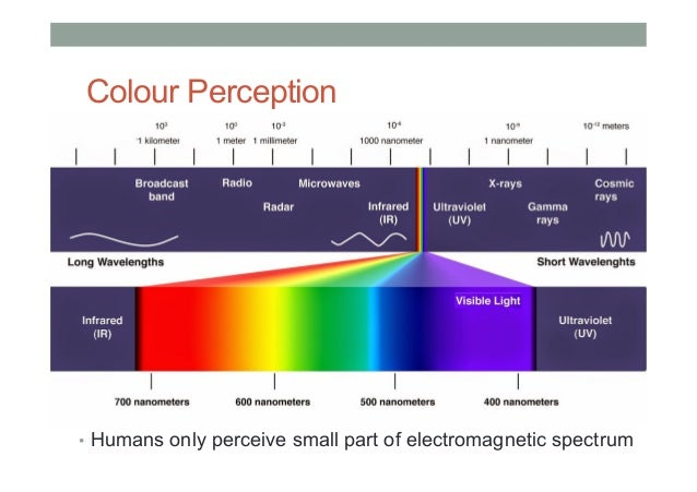 Image result for human perception
