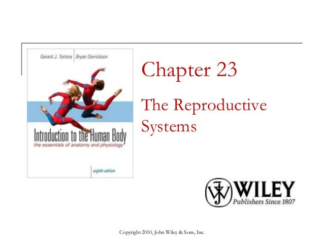 Chapter 23 The Reproductive Systems  Copyright 2010, John Wiley & Sons, Inc.