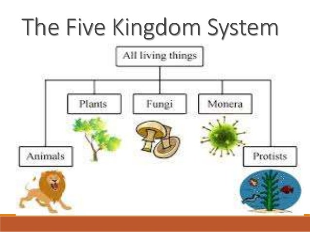 5 kingdoms Five - kingdom system of classification for living organisms | prokaryotic monera & eukaryotic protista, fungi and other cbse class 11&12 topics only @ byjuscom.
