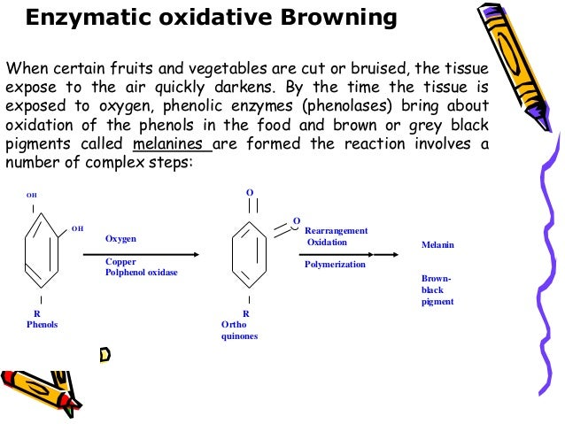 enzymatic browning of apples The development of browning depends on the enzymatic action of the  polyphenol oxidase (ppo) in the 'golden delicious' apple genome ten.
