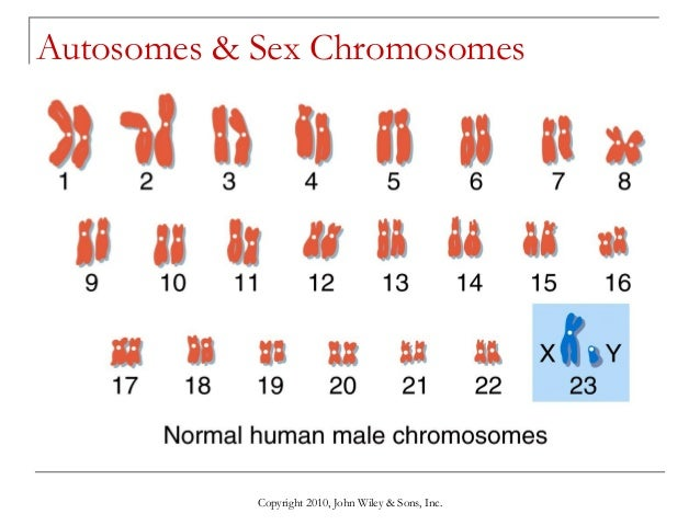 male without y-chromosome sex linked traits in Philadelphia