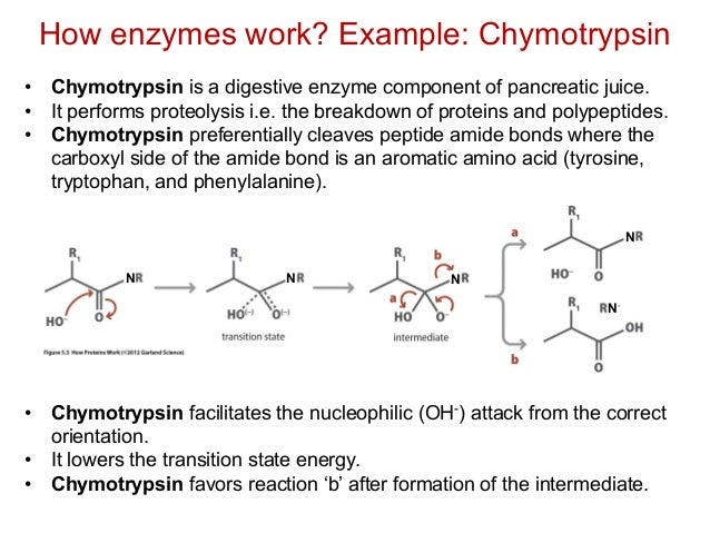 kinetics of chymotrypsin Lecture 3: enzyme kinetics  ph dependence for chymotrypsin • chymotrypsin (another enzyme that hydrolyzes peptide bonds) has an optimum of activity at ph 8.