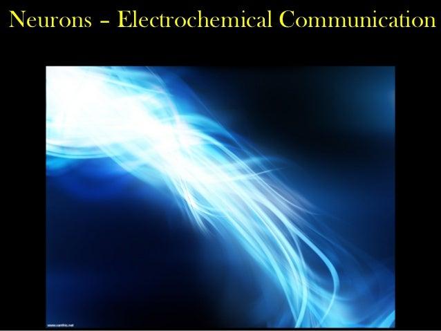 Neurons – Electrochemical Communication