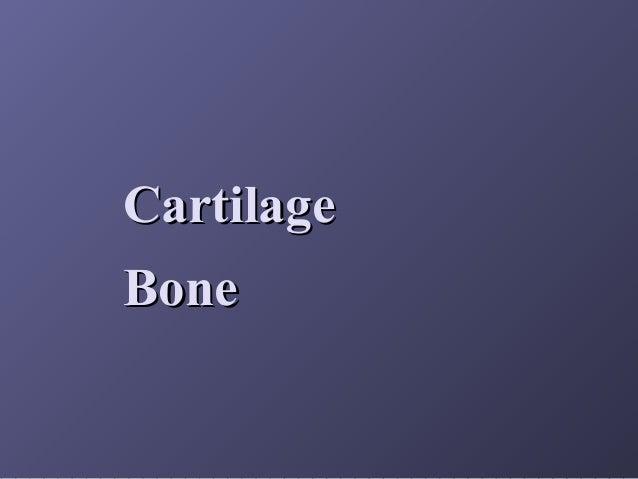Cartilage Bone