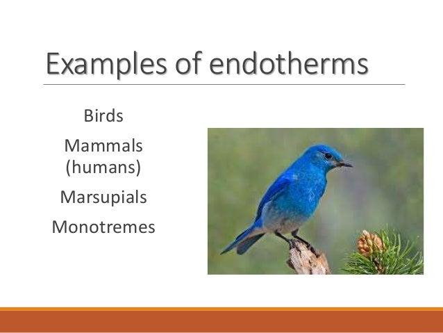 Endothermic Animals