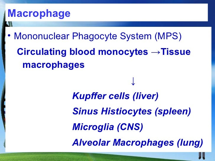 MacrophageDuring chronic inflammation macrophages serve to eliminate injurious agents and initiate repairhowever, they are...