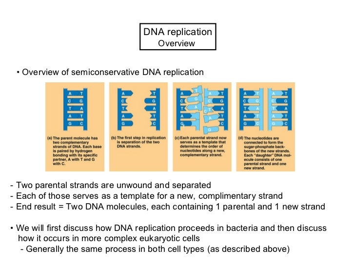 Lecture 5 (biol3600)   dna replication winter 2012 pw