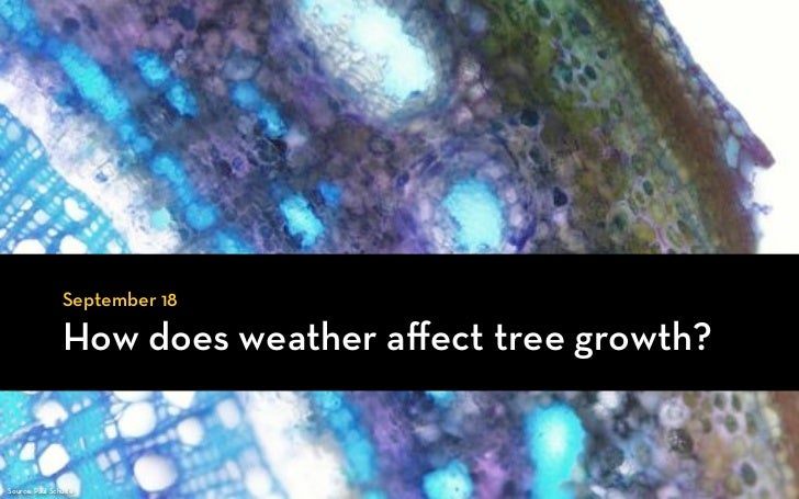 September 18                How does weather affect tree growth?Source: Paul Schulte