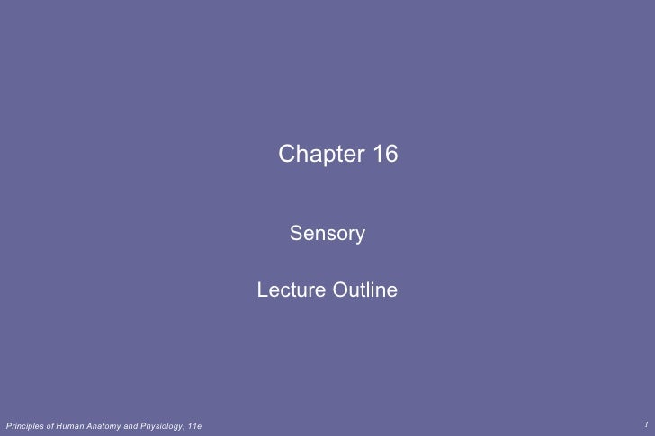 Chapter 16 Sensory Lecture Outline