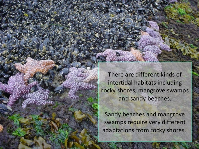 Lecture 6 Intertidal Zones Slide 2