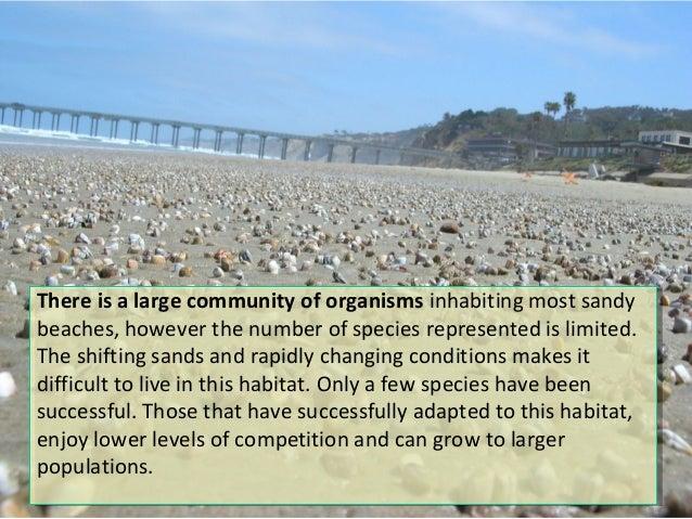 Lecture 6 Intertidal Zones Slide 3