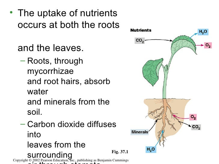 Plant nutrition by muhammad fahad ansari12ieem14 for Minerals present in soil