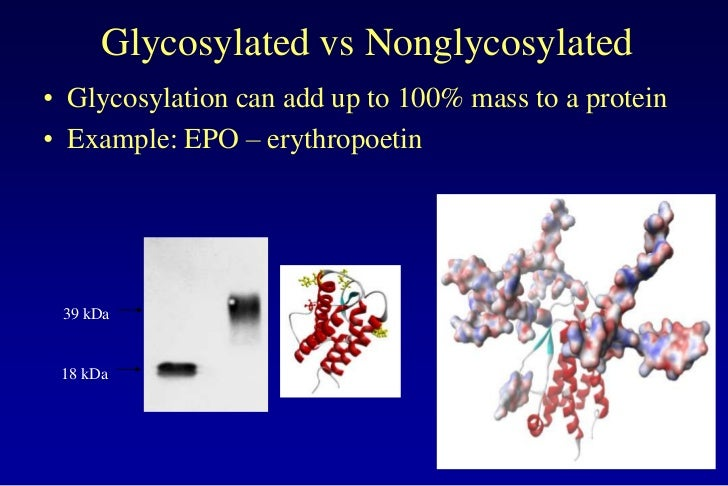 lecture 7 glycosylation in cell culture
