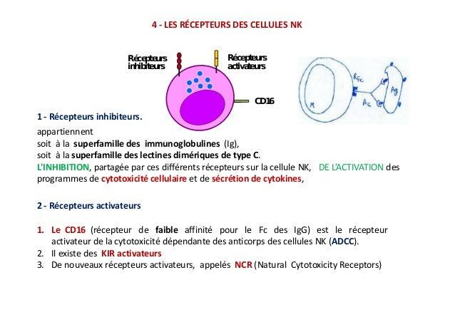 localisation des cellules nk