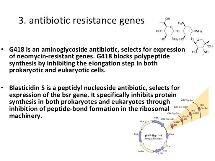 3. antibiotic resistance genes <ul><li>G418 is an aminoglycoside antibiotic, selects for expression of neomycin-resistant ...