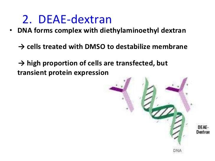 2.  DEAE-dextran <ul><li>DNA forms complex with diethylaminoethyl dextran </li></ul><ul><li>->  cells treated with DMSO to...