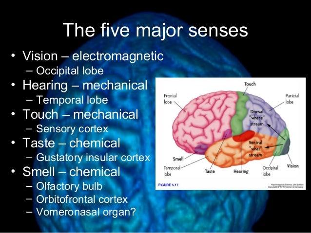Diagram of brain senses illustration of wiring diagram lecture 8 brain structure rh slideshare net simple brain diagram brain anatomy diagram ccuart Choice Image