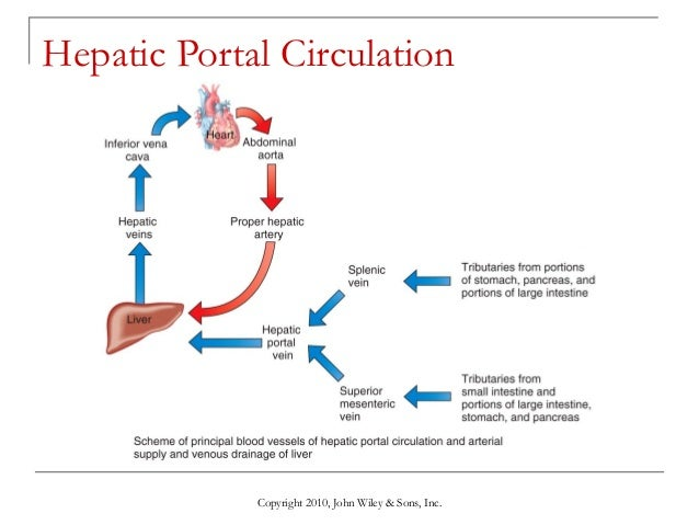 Lecture 8 the cardiovascular system blood vessels and circulation