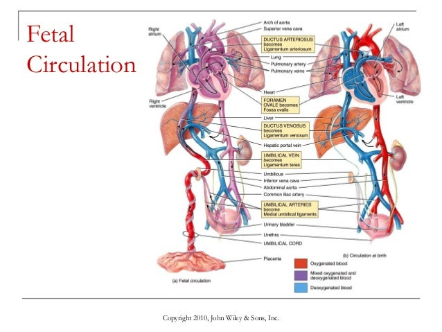 blood vessels and cardiovascular Blood vessel: blood vessel, a vessel in the human or animal body in which blood circulates the vessels that carry blood away from the heart are called arteries, and their very small.
