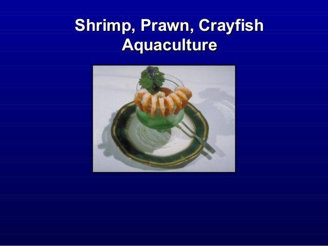 Shrimp, Prawn, CrayfishShrimp, Prawn, Crayfish AquacultureAquaculture