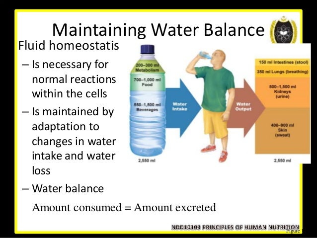 fluid and electrolyte balance pdf