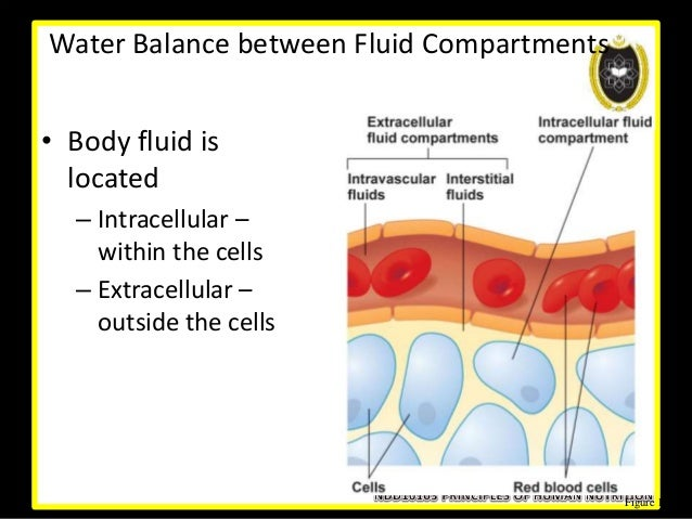adh aldosterone extracellular fluid ecf balance Sodium is the major cation of the extracellular fluid it is responsible  hormonal  imbalances involving adh and aldosterone may also result in  chloride  functions to balance cations in the ecf, maintaining the electrical neutrality of  this fluid.