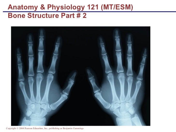 Anatomy & Physiology 121 (MT/ESM) Bone Structure Part # 2