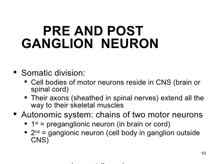 lecture function autonomic nervous system