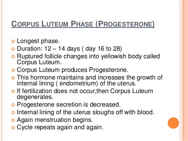CORPUS LUTEUM PHASE (PROGESTERONE)  Longest phase.  Duration: 12 – 14 days ( day 16 to 28)  Ruptured follicle changes i...