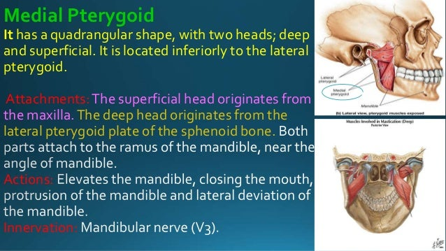 lecture of tmj, Human Body