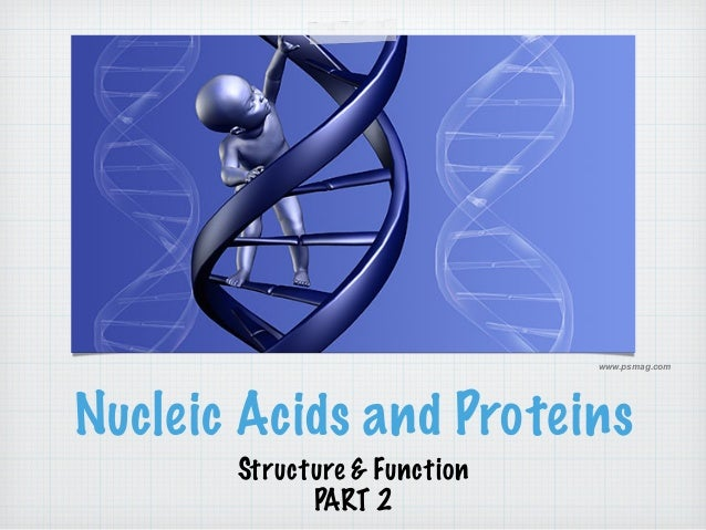 www.psmag.com  Nucleic Acids and Proteins  Structure & Function  PART 2