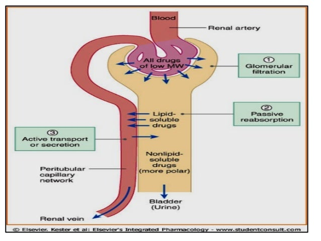 Renal diagram medications diy enthusiasts wiring diagrams lectures 15 excretion of drug enterohepatic circulation rh slideshare net renal circulation phos renal medication ccuart Image collections