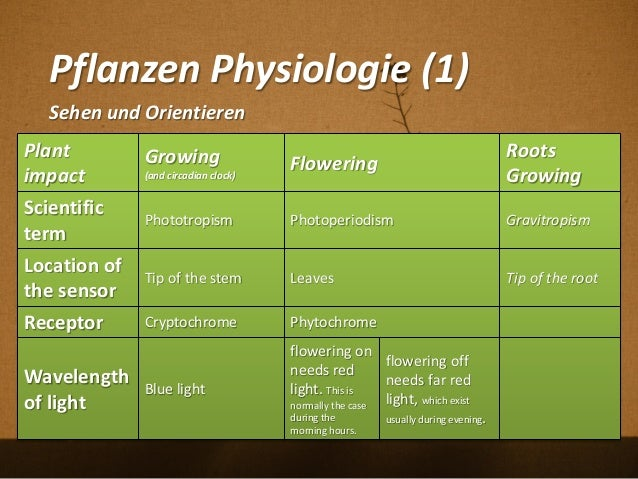 Pflanzen Physiologie (1) Plant impact Growing (and circadian clock) Flowering Roots Growing Scientific term Phototropism P...