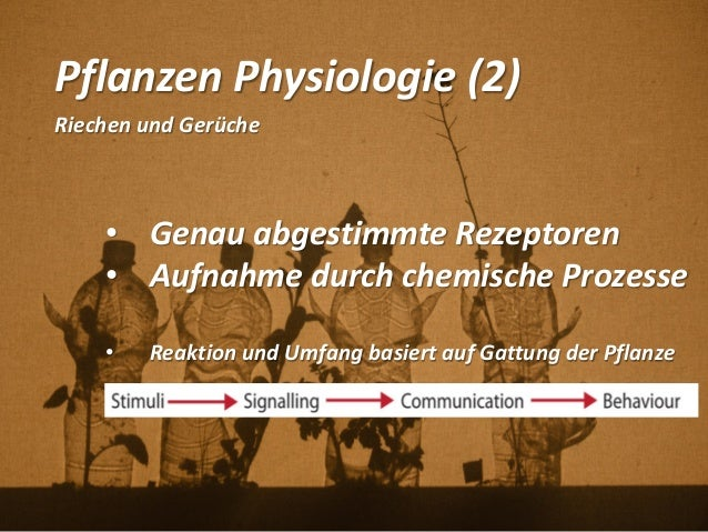 Pflanzen Physiologie (2) Riechen und Gerüche • Genau abgestimmte Rezeptoren • Aufnahme durch chemische Prozesse • Reaktion...