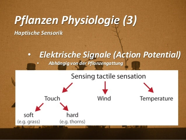 Pflanzen Physiologie (3) Haptische Sensorik • Elektrische Signale (Action Potential) • Abhängig von der Pflanzengattung