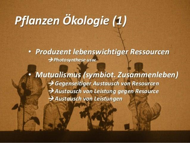 Pflanzen Ökologie (1) • Produzent lebenswichtiger Ressourcen  Photosynthese usw. • Mutualismus (symbiot. Zusammenleben) ...