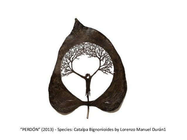 """""""PERDÓN"""" (2013) - Species: Catalpa Bignonioides by Lorenzo Manuel Durán1"""