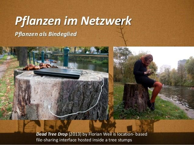 Pflanzen im Netzwerk Pflanzen als Bindeglied Dead Tree Drop (2013) by Florian Weil is location- based file-sharing interfa...