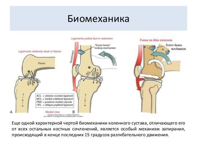Биомеханика коленного сустава санаторий по оздоровлению суставов