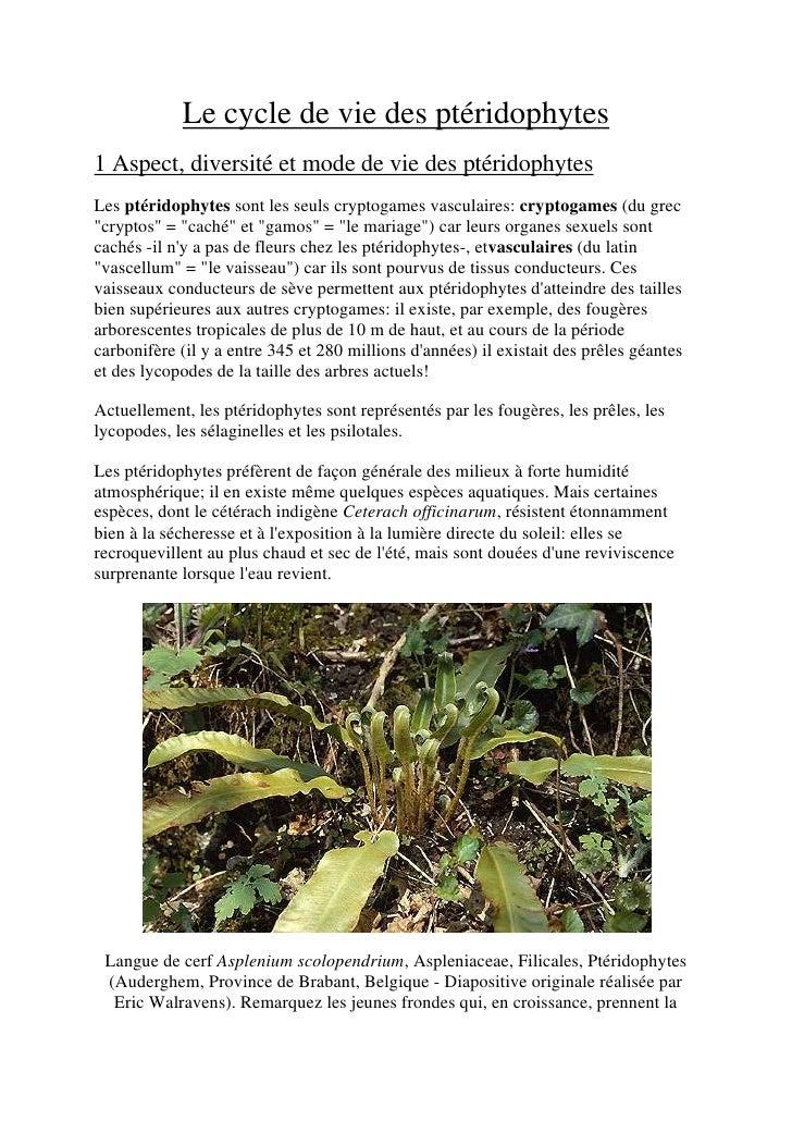 Le cycle de vie des ptéridophytes1 Aspect, diversité et mode de vie des ptéridophytesLes ptéridophytes sont les seuls cryp...