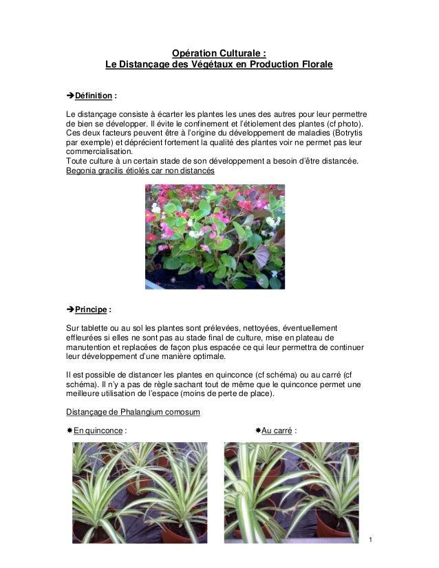 1 Opération Culturale : Le Distançage des Végétaux en Production Florale Définition : Le distançage consiste à écarter les...