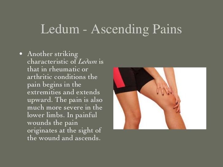 Ledum palustre - Puncture Wound Remedy