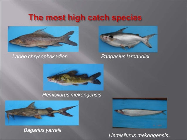 3.6. total catch by feeding type (%)