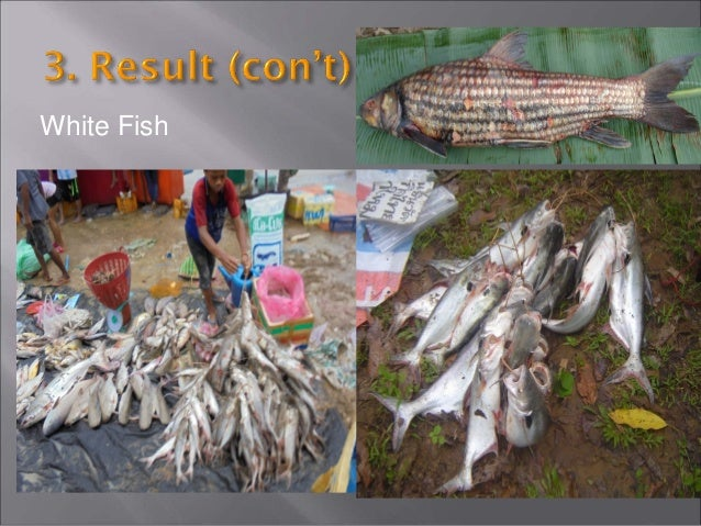 • The results that we have gathered can now be applied to the fisheries resources management. • This management is importa...