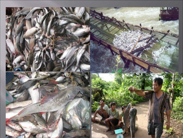 1) To monitor and determine status and trends in fisheries resources in terms of diversity and relative abundance in the K...