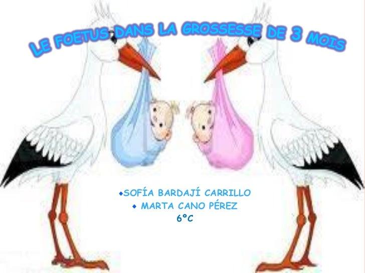 SOFÍA BARDAJÍ CARRILLO   MARTA CANO PÉREZ         6ºC
